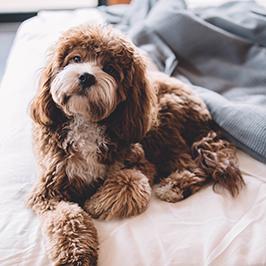 hotel-ambasciatori-pet-friendly